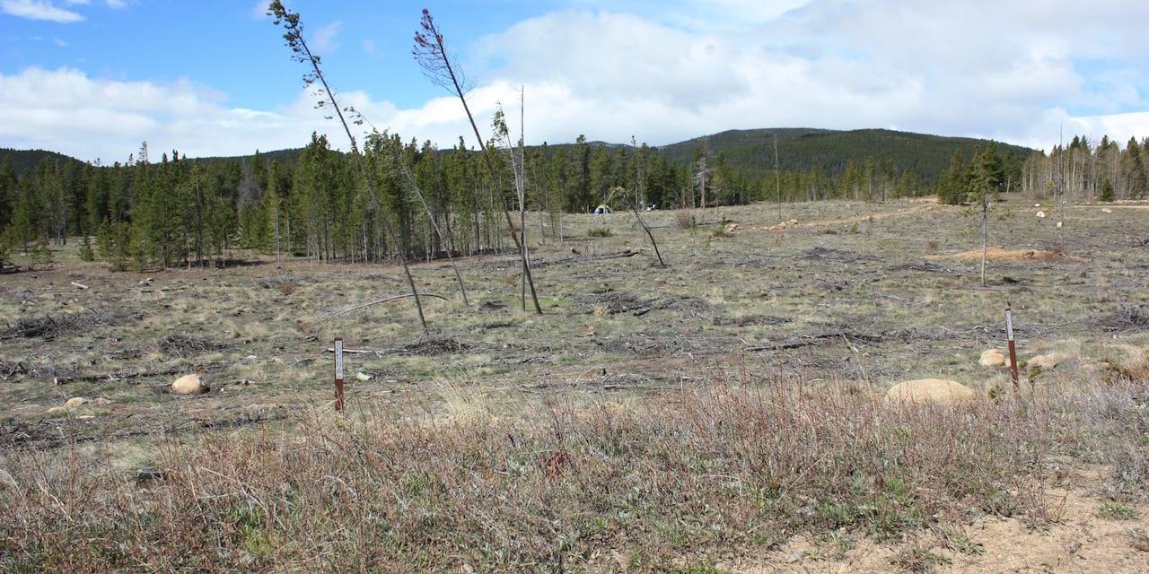 West Magnolia Nederland Colorado Roosevelt National Forest Forest
