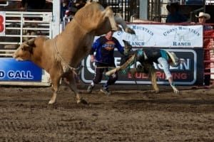 Steamboat Springs Rodeo Bull Rider