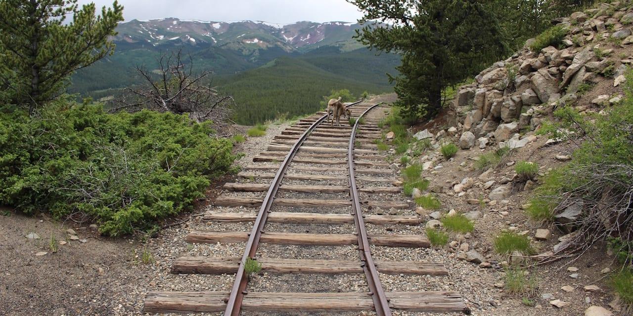 Boreas Pass Hiking Trail
