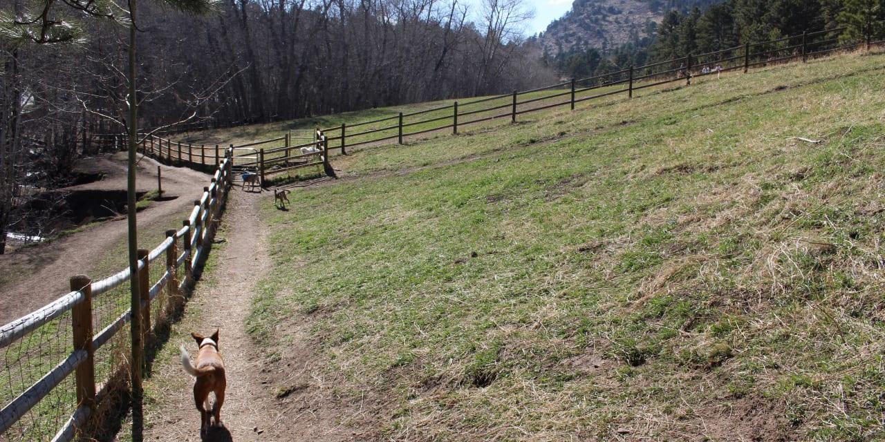 Elk Meadow Dog Park Evergreen Colorado