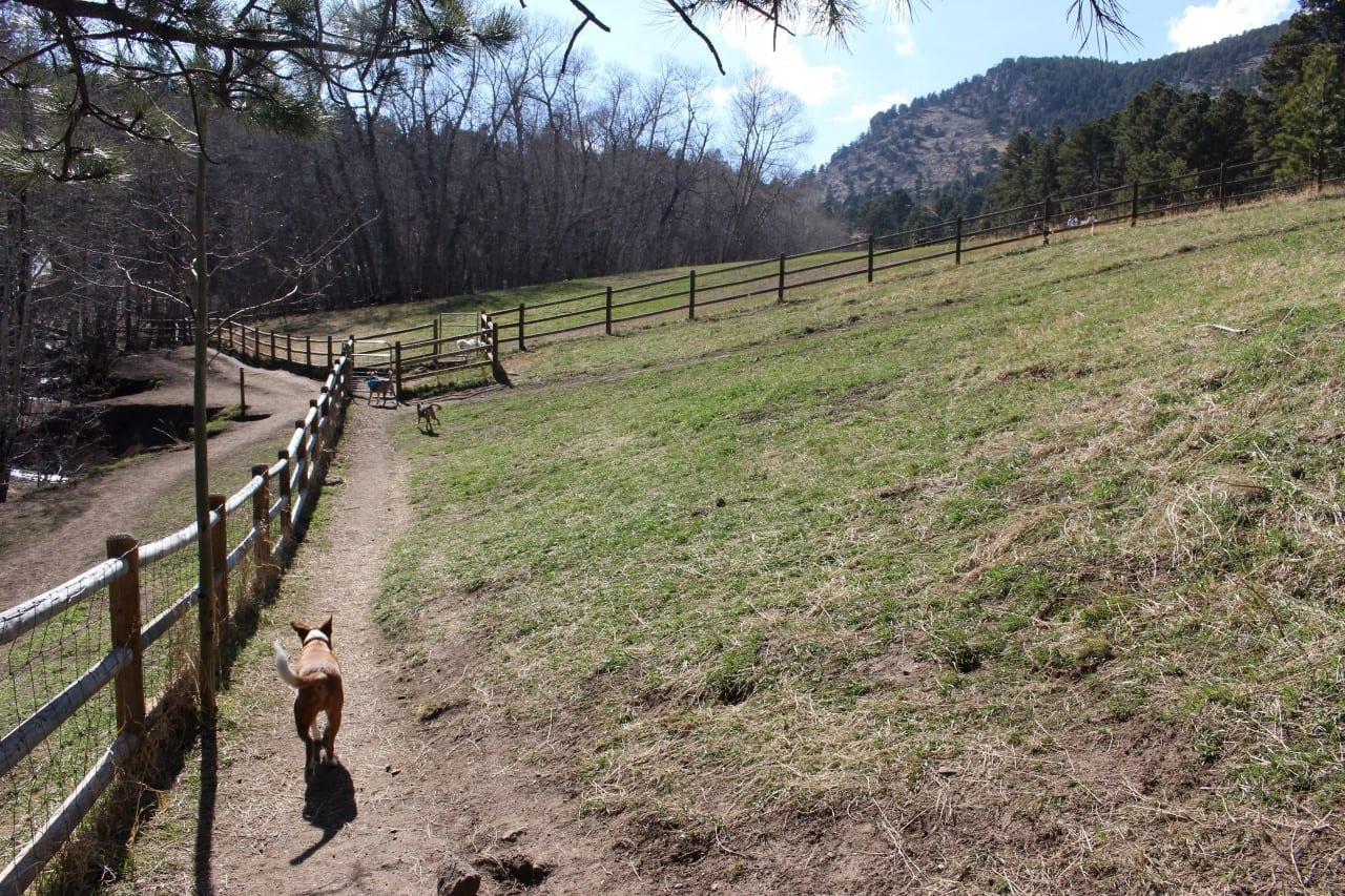 Dog Park Evergreen Colorado