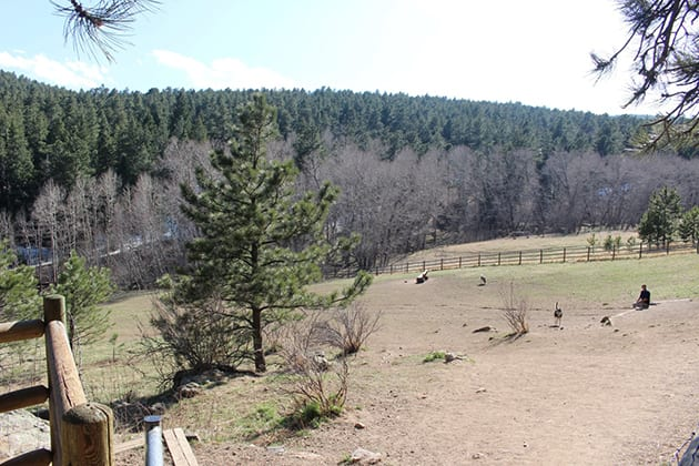 Elk Meadow Dog Park