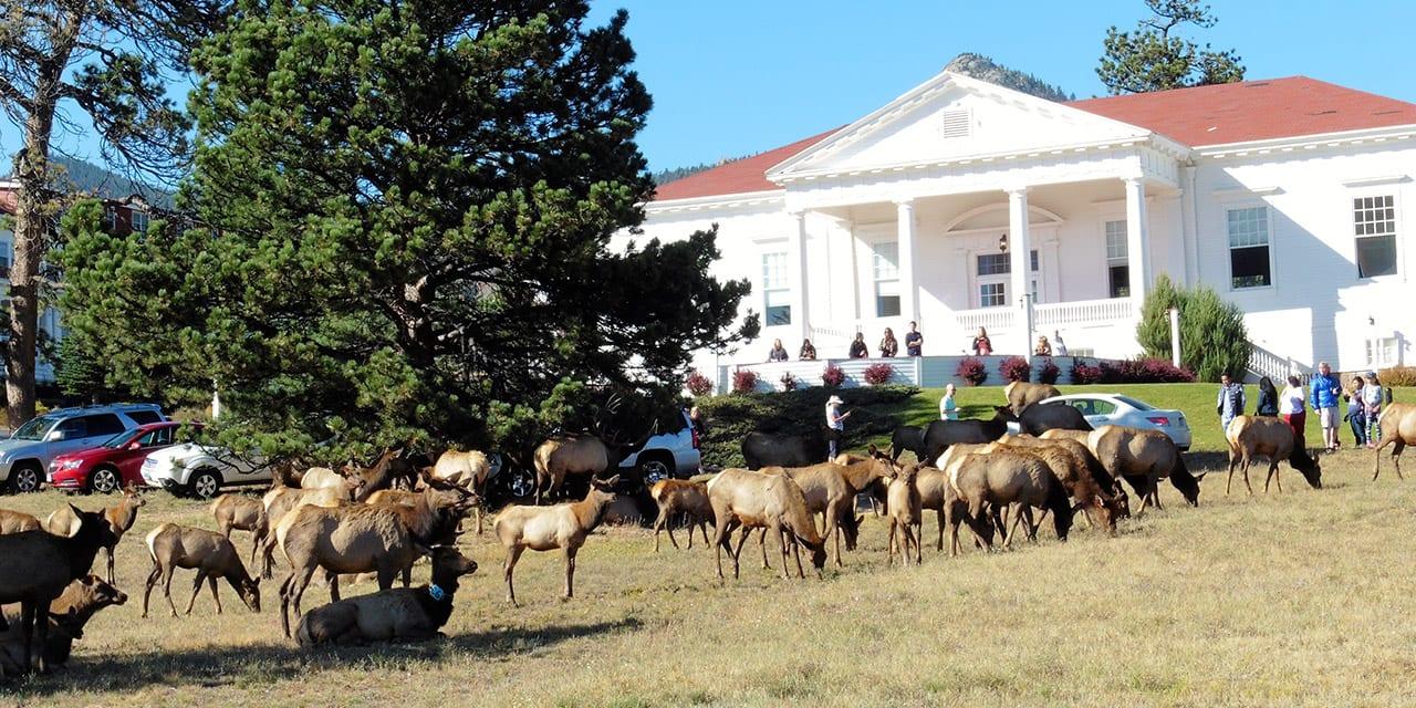 Elk Fest Estes Park CO