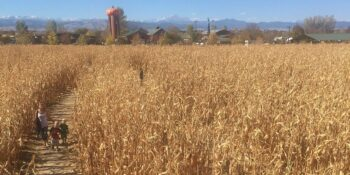 Anderson Farms Erie Corn Maze