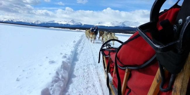 Alpine Adventures Dogsledding Leadville