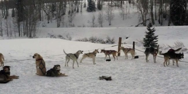 Cosmic Cruisers Dog Sled Tours Gunnison