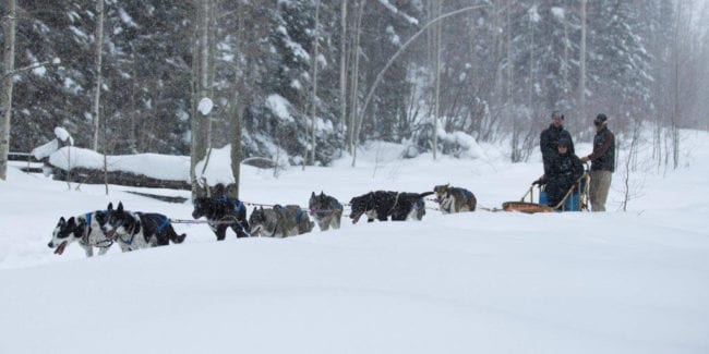 Durango Dog Ranch Dog Sled Tours Hesperus