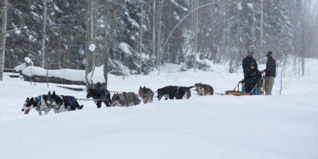 Durango Dog Ranch Dog Sled Tours Hesperus