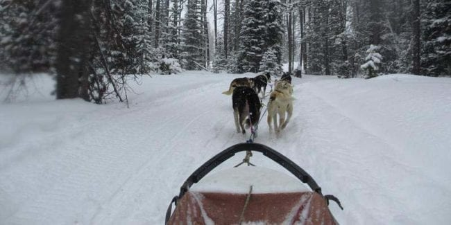Grizzle-T Dog Sled Works Steamboat Springs