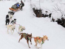 Krabloonik Dogsledding Aspen