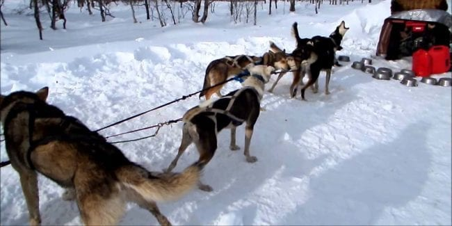 Mountain Musher Dog Sledding Bond