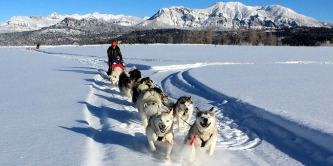 Pagosa Dogsled Adventures Pagosa Springs