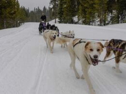 Winterhawk Doglsed Adventures Leadville