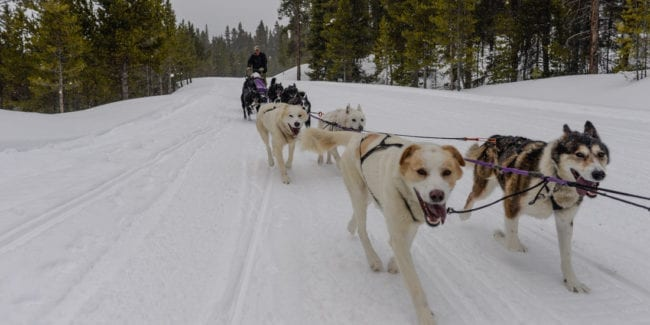 Winterhawk Doglsed Adventures Leadville