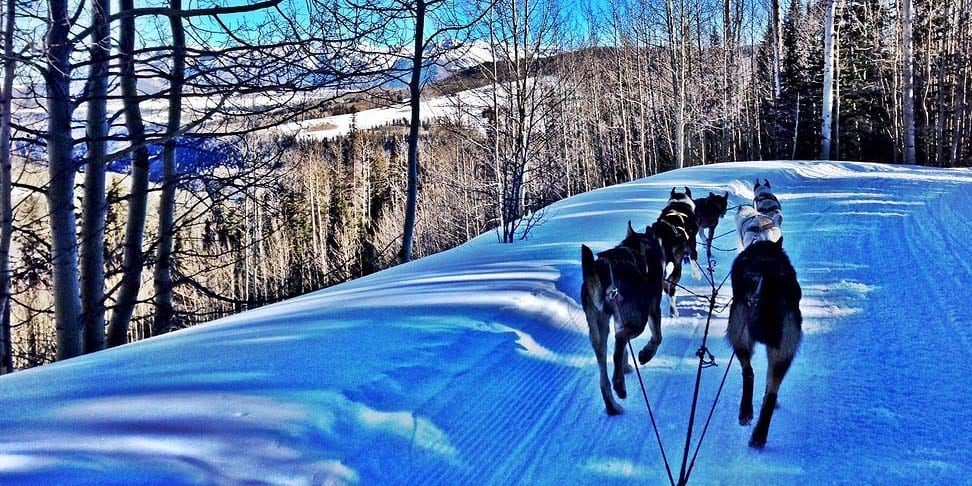 Wintermoon Sled Dog Adventures Telluride