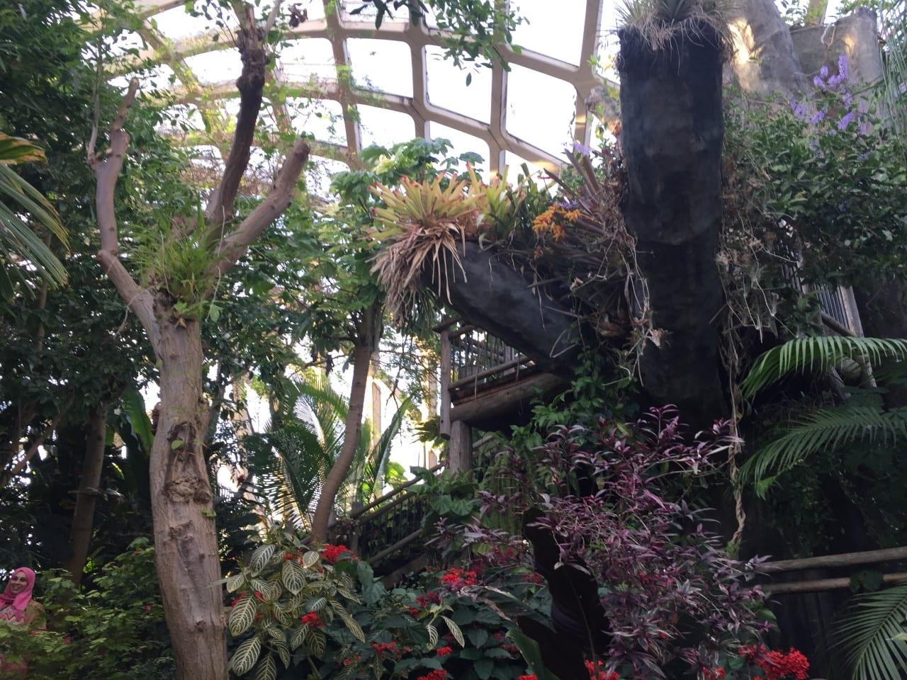 Denver Botanic Gardens Dome Plants