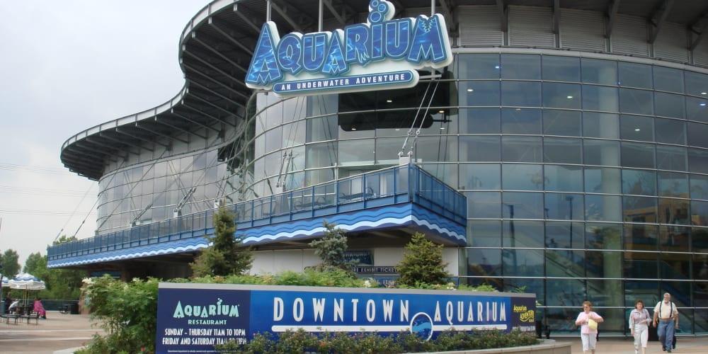Downtown Aquarium Dive Lounge Denver
