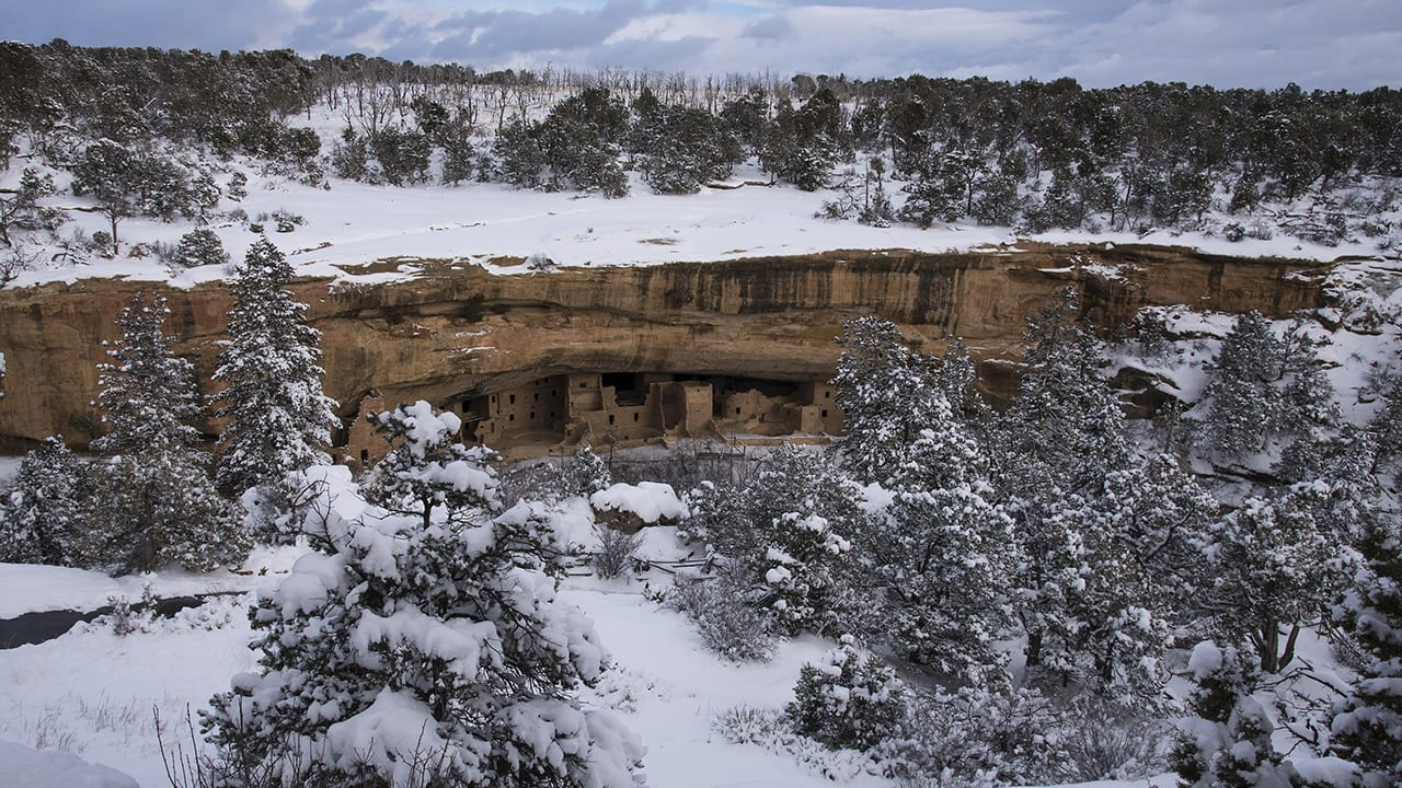 Mesa Verde Winter Spruce Tree