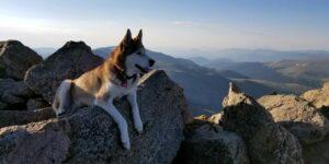 Mount Bierstadt Summit Kona Dog