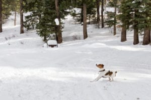 Vallecito Lake Cross Country Skiing Dog Playing Catch