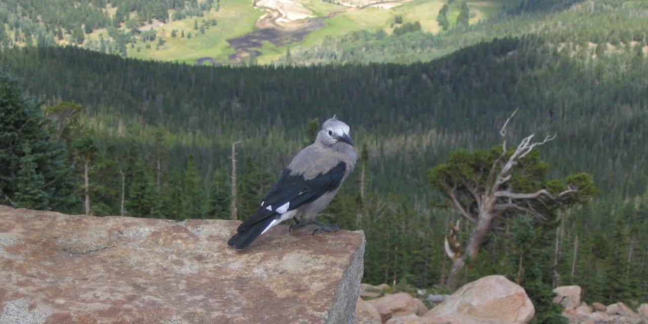 Beaver Meadows Horseshoe Park Bird
