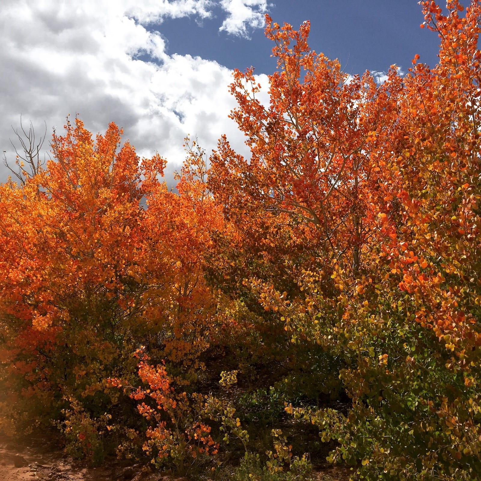 South Park Colorado Fall Colors Red Aspens