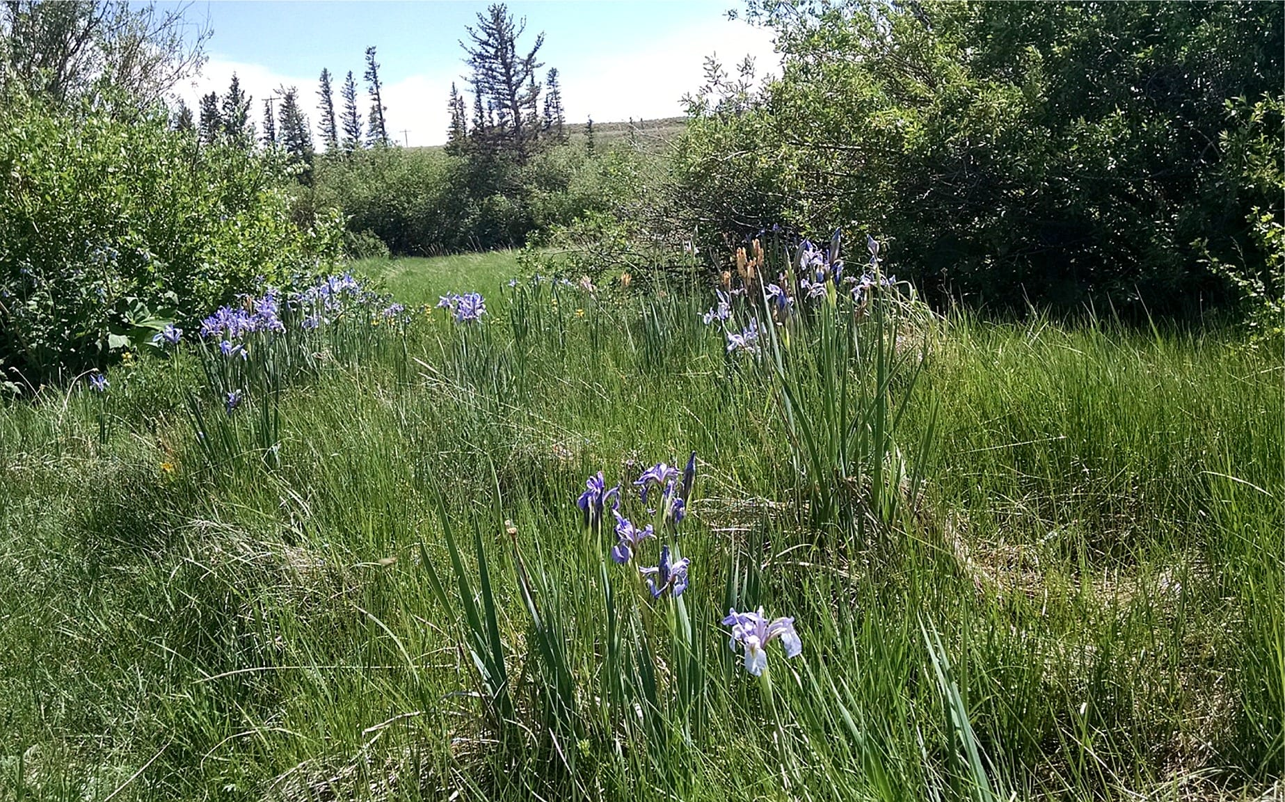 Wildflowers along the Tarryall River at Cline Ranch South Park Colorado
