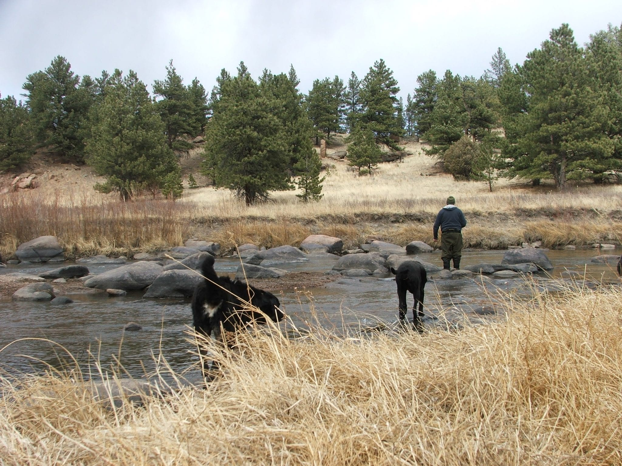 Fishing Two Dogs Happy South Park Colorado