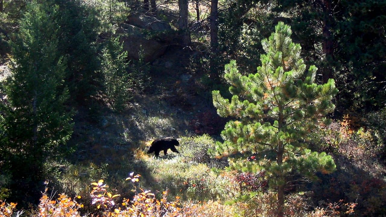 Big Bluestem Hiking Trail Bear Boulder Colorado