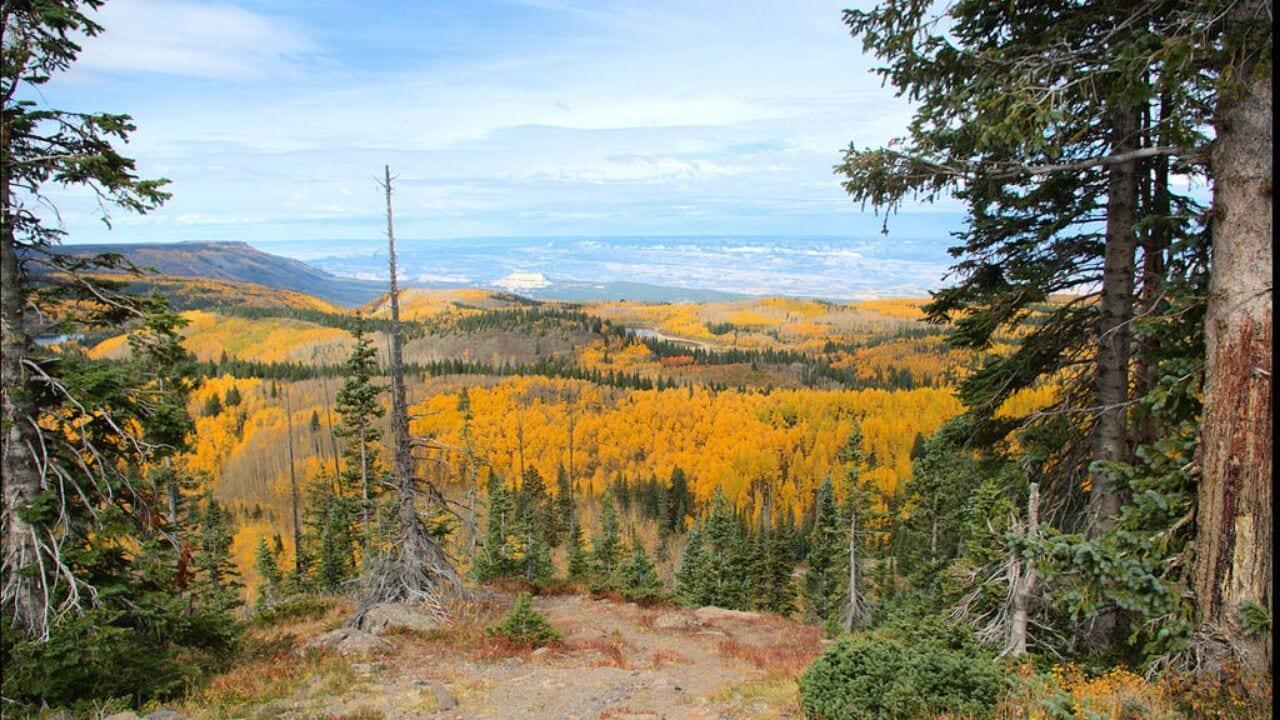 Grand Mesa Trails Off Road Jeep Trails Musim Gugur Colorado