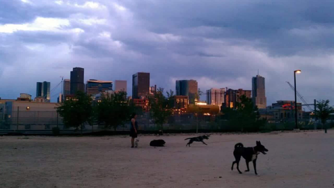 Railyard Dog Park Denver Colorado