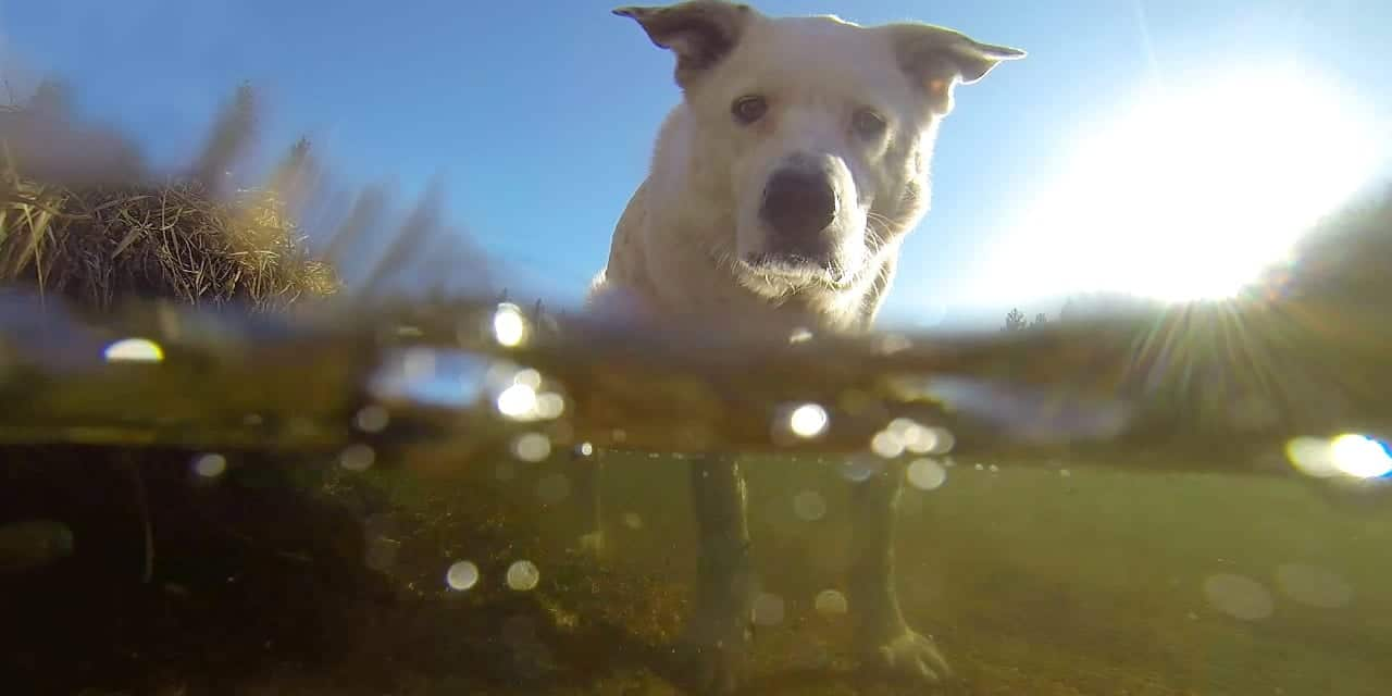 Platte River Dog Colorado GoPro