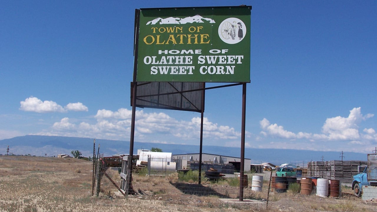 Olathe Sweet Corn Colorado