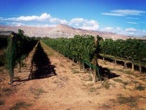 Augustina's Winery Vineyard Palisade Colorado