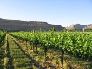Vineyards Palisade Colorado Bookcliff Vineyards