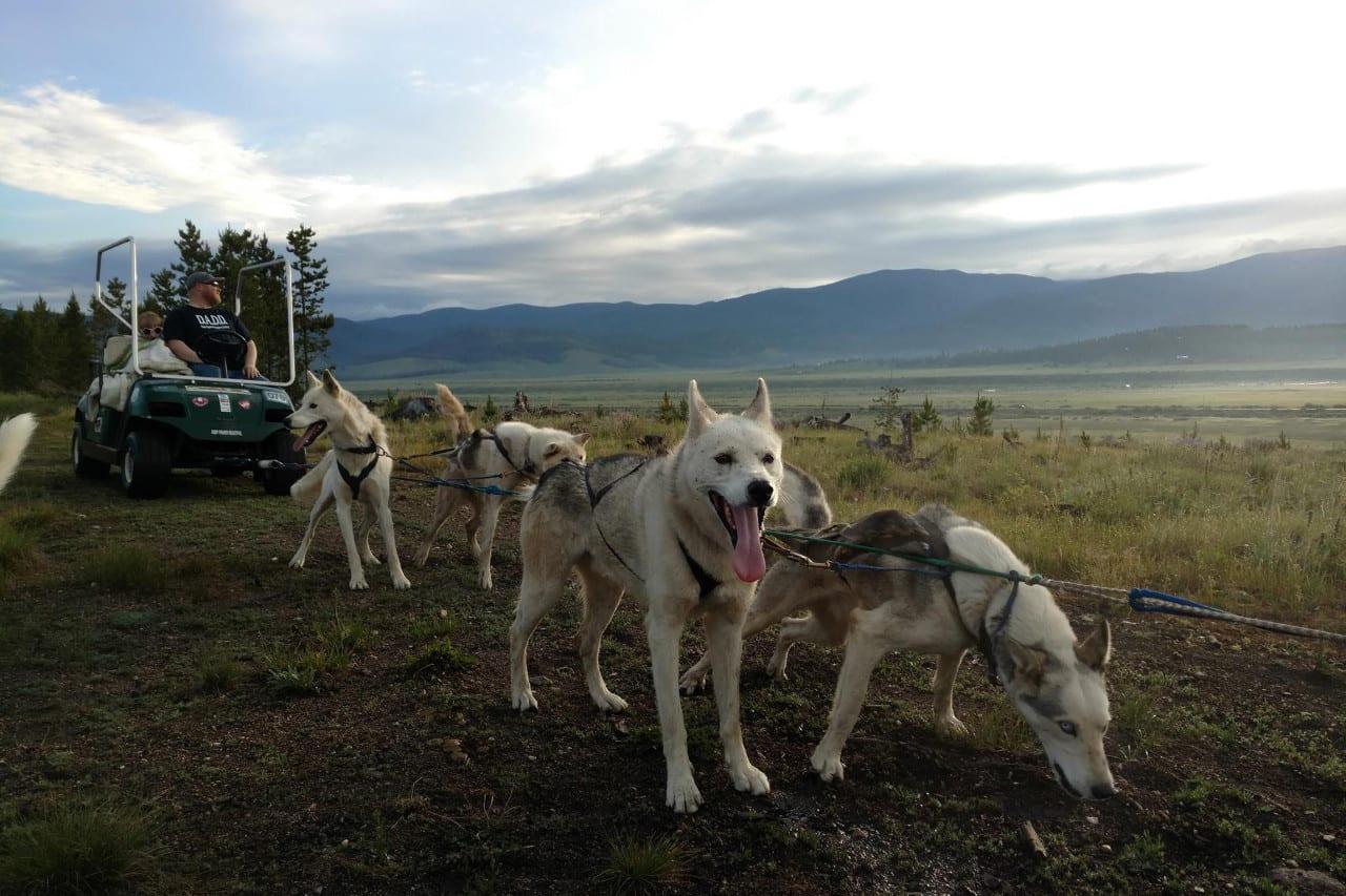 Dog Sled Rides Winter Park Summer Cart Rides Colorado