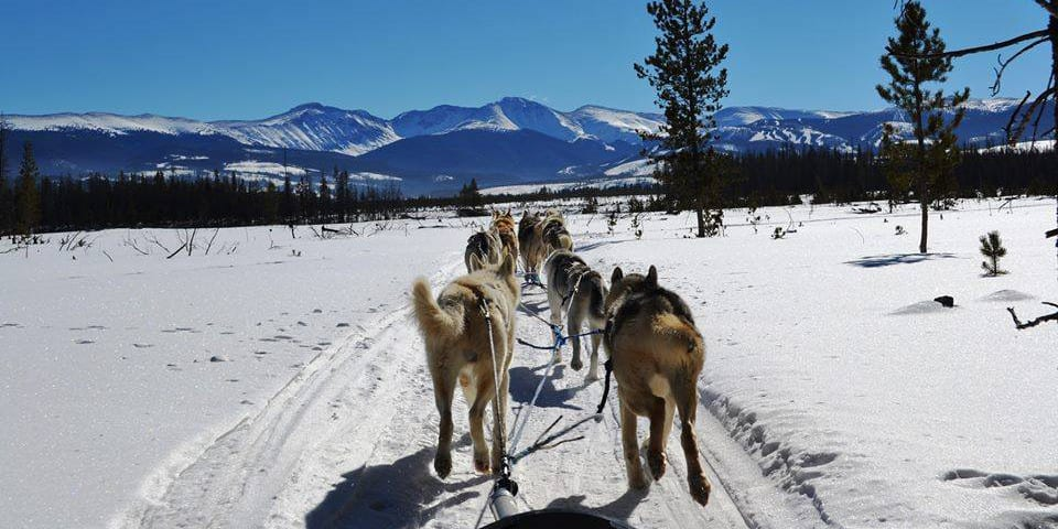 dog sled rides of winter park - 960×480
