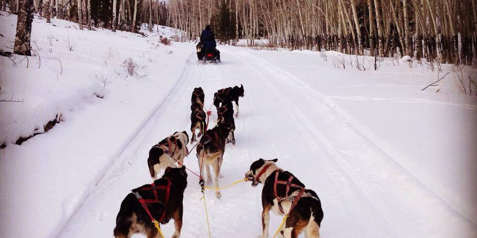 Monarch Dog Sled Tours Salida