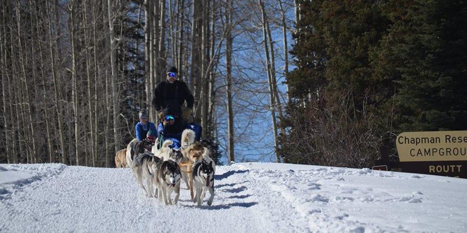 Snow Buddy Dog Sled Tours