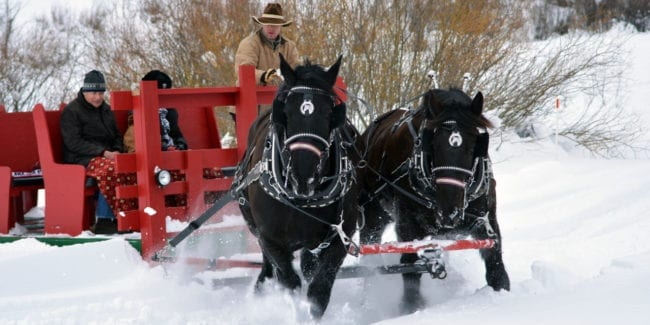Bearcat Stables Winter Sleigh Ride Vail