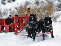 Bearcat Stables Sleigh Ride Edwards