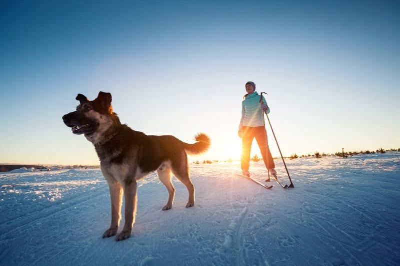Gunnison Nordic Club Cross Country Skier Dog