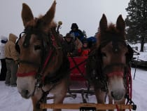 Majestic Sleigh Rides Pagosa Springs
