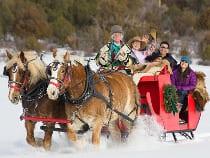 Telluride Horseback Adventures Sleigh Ride