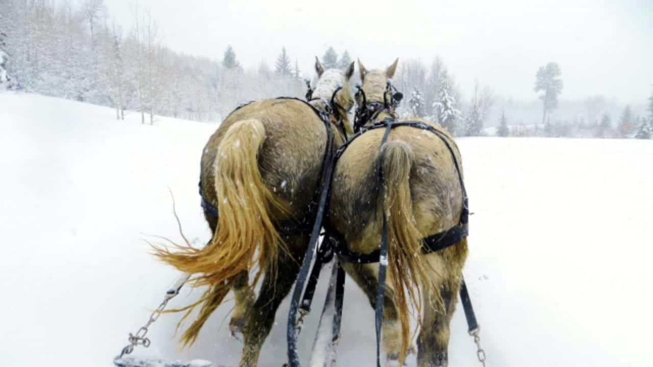 Aspen Carriage and Sleigh Colorado