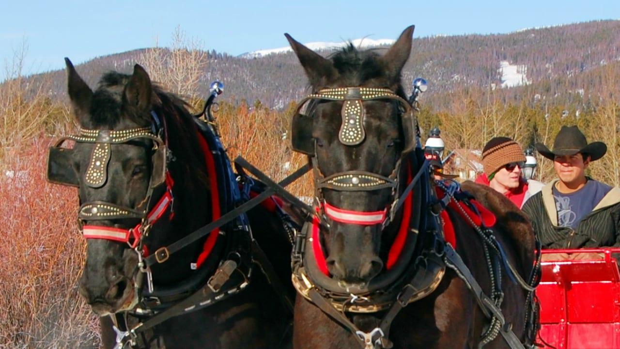 Breckenridge Stables Sleigh Horses