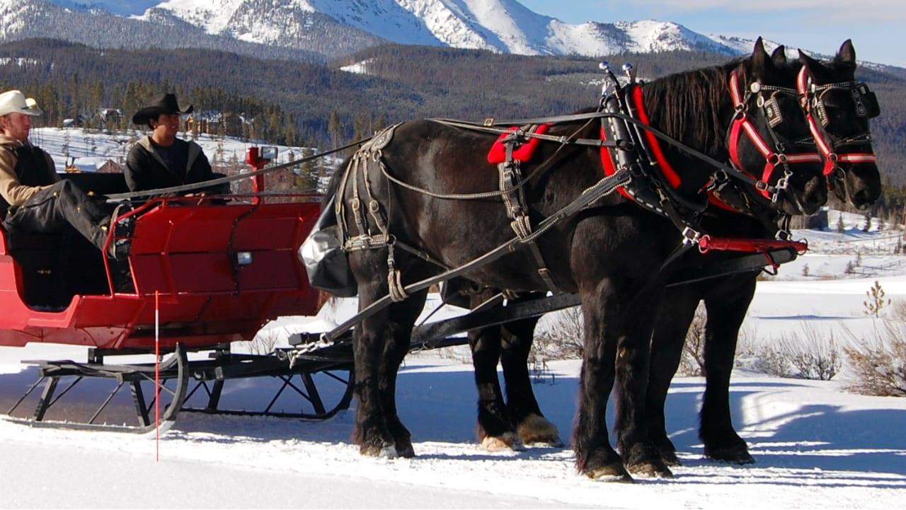 Breckenridge Stables Horse Drawn Sleigh
