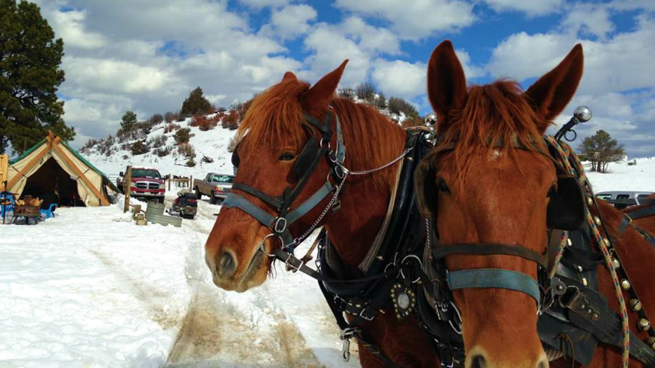 Majestic Sleigh Rides Horses Paogsa Springs