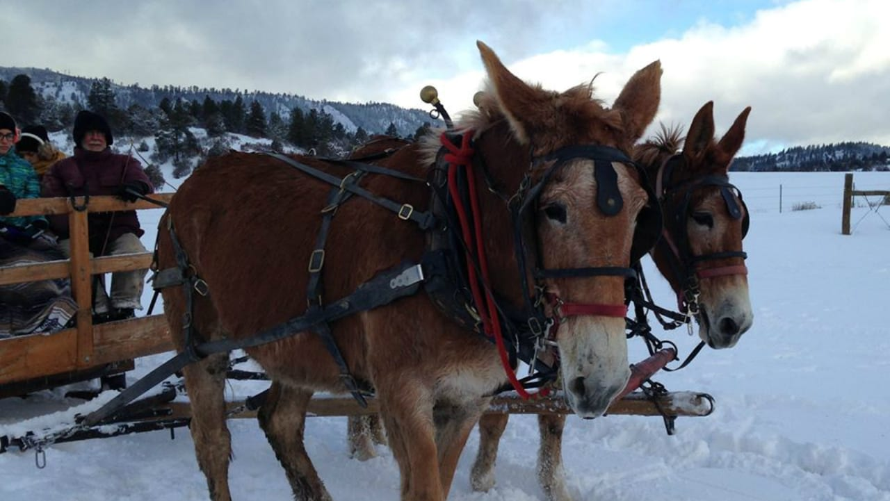 Majestic Sleigh Rides Paogsa Springs