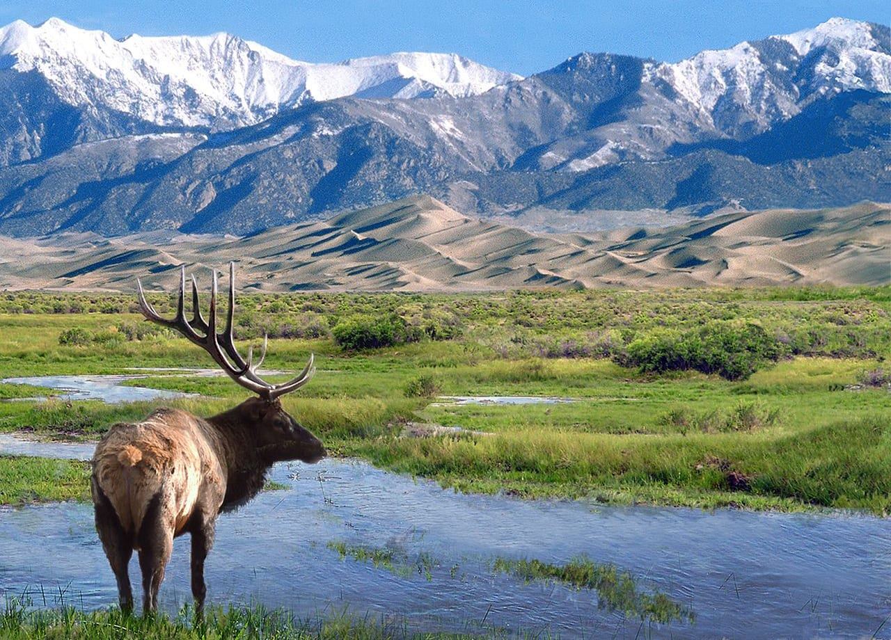 Big Spring Creek Great Sand Dunes Bull Elk